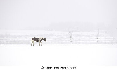 Pinto Horse in a Snow Storm