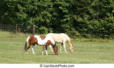 Pinto horse in the field