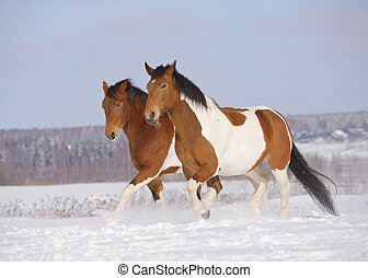 pinto horses in winter