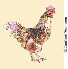 pintura de acuarela, bosquejo, gallo