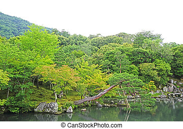 pinus thunbergii, mountain, lake with reflection in Japan zen garden