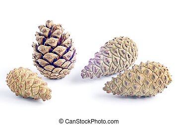 Four pine cones on a white background