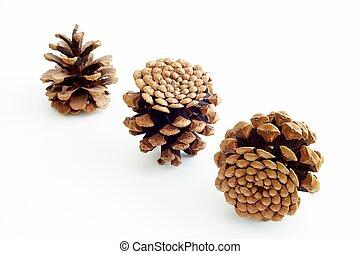 Piny cones on white ground.