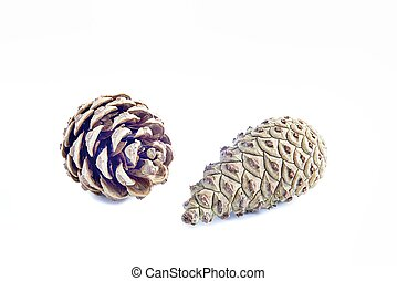 Two pine cones on a white background
