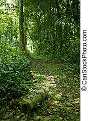 pioggia, percorso, 2, foresta, modo