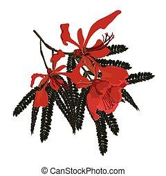 Pionicana Flowers - Red flowering Poinciana Flowering branch...