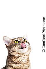 pionowy, przestrzeń, głodny kot, kopia, chorągiew