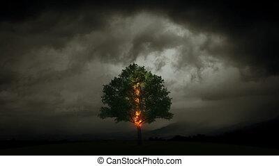 piorun, płonie, niejaki, drzewo