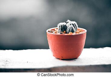 piovoso, offuscamento, fondo, terrazzo, cactus, giorno