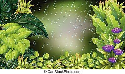 piovoso, scena, foresta, giorno