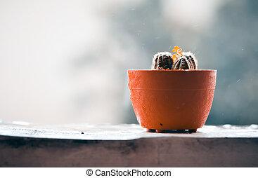 piovoso, terrazzo, fondo, offuscamento, cactus, giorno