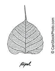 pipal, foglie