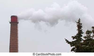 Pipe steaming
