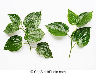Piper sarmentosum or Wildbetal leafbush on white background