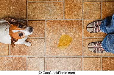 pipi, sommet, gronder, chien