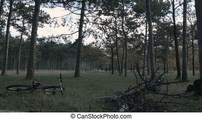 pique-nique, forêt