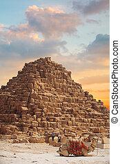pirámides de giza, en, egypt.