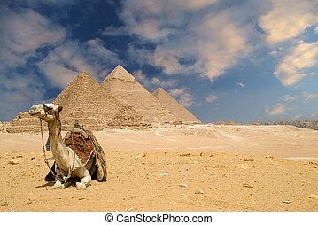 piramides, kameel