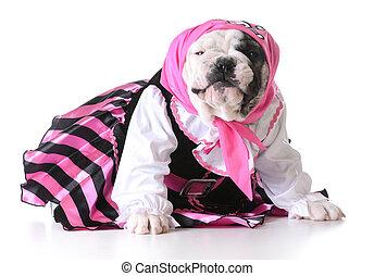 pirate puppy