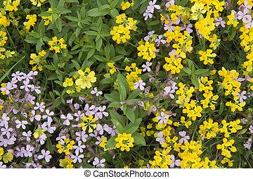 pirineos, wildflowers