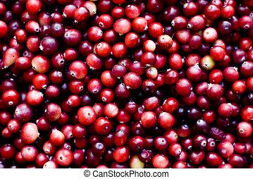 piros, érett, cranberries, háttér