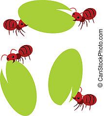 piros, hangya, csapatmunka, ábra