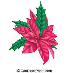 piros, mikulásvirág