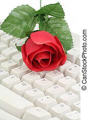 piros rózsa, és, billentyűzet
