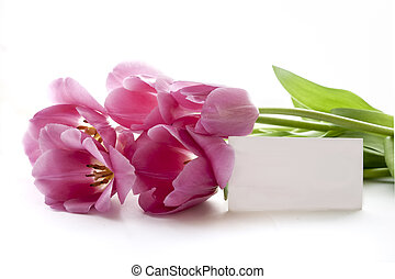piros, tulipánok, képben látható, egy, white háttér, noha, tiszta, kártya, helyett, szöveg