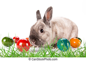 pisanki, trawa, zielony, królik