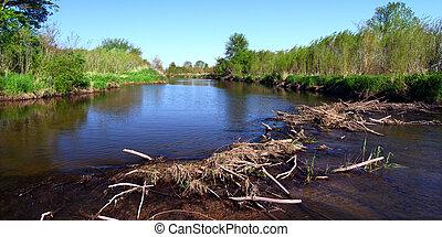 Piscasaw Creek Beaver Dam