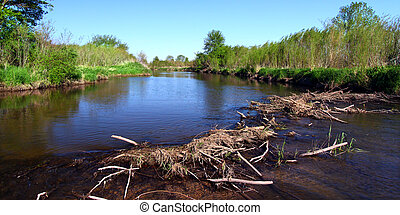 Piscasaw Creek Beaver Dam - Beaver dam in construction on...