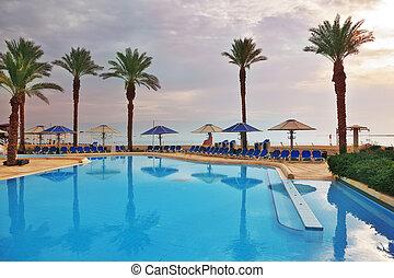 piscina, palma, natação, árvores