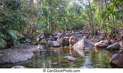piscina, rainforest