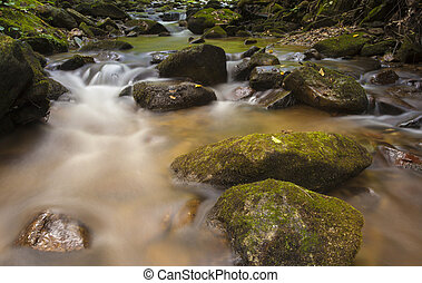 Pisgah National Forest - Small creek running on the Pisgah...
