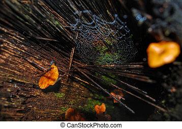 piso bosque