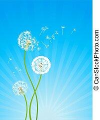 pissenlit, fleurs