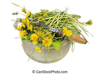 pissenlits, jardin, mauvaises herbes