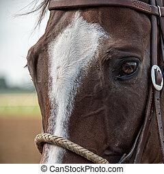 pista, closeup, cavalo, olho, reflexão