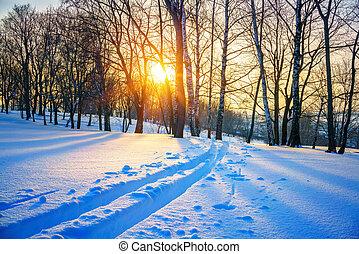 pista, esqui, floresta, inverno