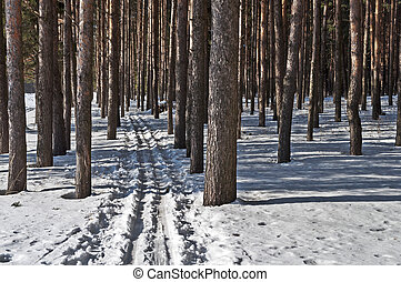 pista, esqui, floresta, pinho