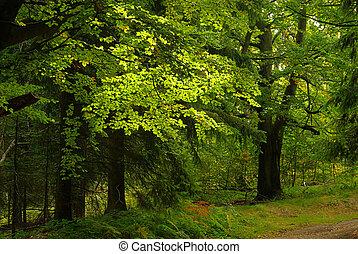 pista, hiking, hirschgrundweg, 14