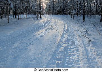 pista, sueco, esqui, floresta