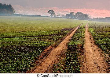 pista, terra cultivada, através