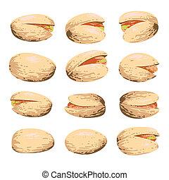 pistacchio, bianco, set, isolato, frutta