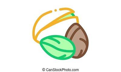 pistachio nut Icon Animation. color pistachio nut animated icon on white background