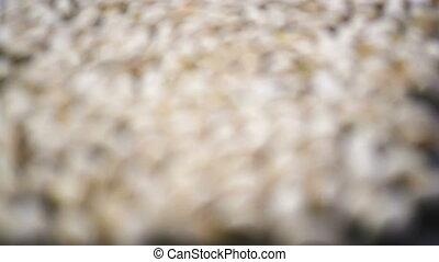 Pistachio nut moving depth of focus