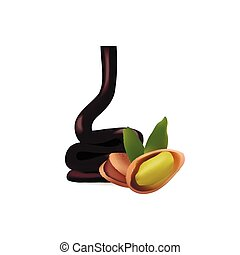 pistachio with liquid chocolate isolated vector illustartion