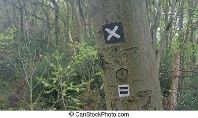 piste, arbre, randonnée, signe