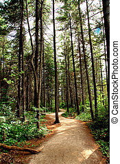 piste, forêt